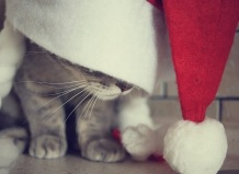 animals-beautiful-cat-christmas-cute-Favim.com-332360
